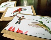 Hummingbird Mix Blank Art Note Cards Set Of Six