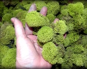 Reindeer moss-Deer foot moss-Fluffy Lichens-2 oz bag Preserved Lichens-Spring Green Colors in assorted sized spongy soft balls