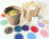 12 Plantable Seed Party Favors Personalized by Nature Favors - Unique Party Favor Idea - Rainbow Colors