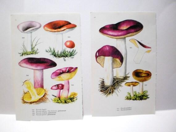 2 Poisonous Mushroom Botanical Prints Book by VintageCarolina