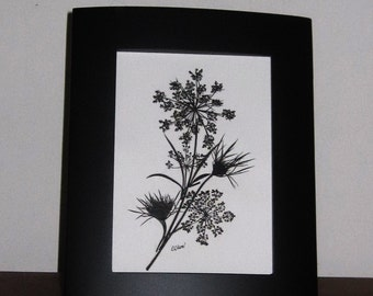 Queen Annes Lace pressed, silhouetted in black frame ORIGINAL
