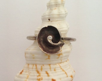 Nautilus Ring with Ancient Roman Band