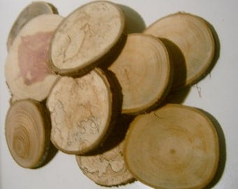 70 Tree Branch Slices 2 to 3 inch