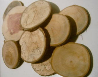 100 Tree Branch Slices 2 to 3 inch