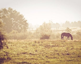 Autumn Morning - Fine Art Photograph - rustic vintage style horse home decor print