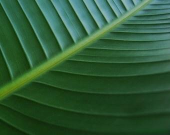 Deep Green - Banana Leaf big green be green island treasury gift Tropic Hawaii green leaf st patrick deep green Exotic green Fine Art Print