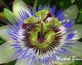 Purple Passion Flower Photo Note Card-Treasury List