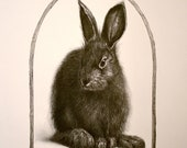 Hommage to the Hare