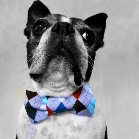 Dog Collar Bow Tie- Argyle