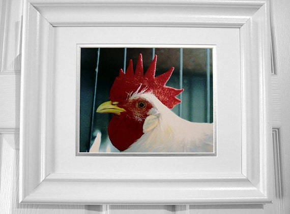Chicken - Farm House Rustic Kitchen Photography White Red Yellow Rooster Fine Art Lustre Print - 8x10 Photograph