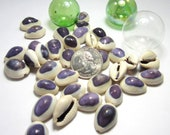 Beach Decor Seashells - Nautical Purple Top Cowrie Shells, 12pc