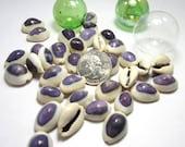Beach Decor Seashells - Nautical Decor Purple Top Cowrie Shells - Purple Seashells - Purple Shells - Purple Sea Shells - Coastal Decor 12pc