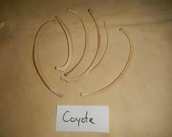 Western Coyote Ribs- Real Bone-  4 Pcs