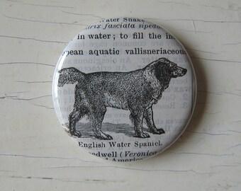 English Water Spaniel Vintage Dictionary Illustration Magnet