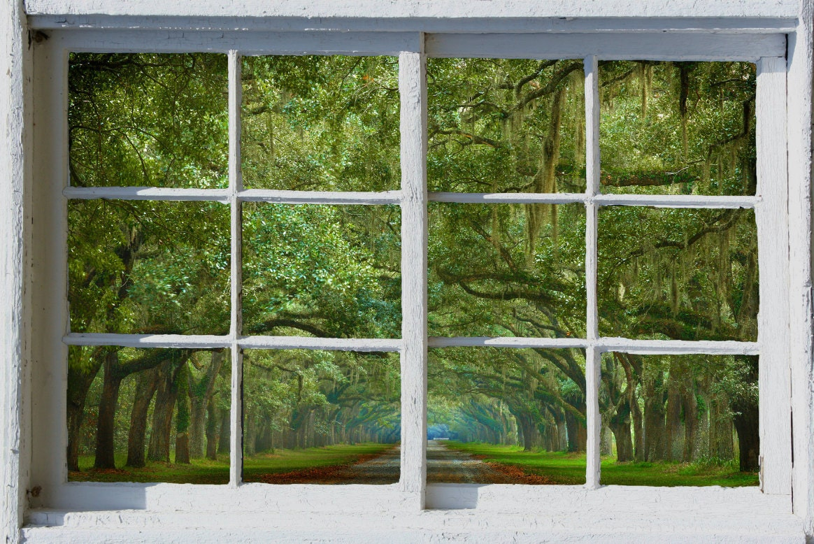 Wall Mural Window Self Adhesive Savannah Live Oak