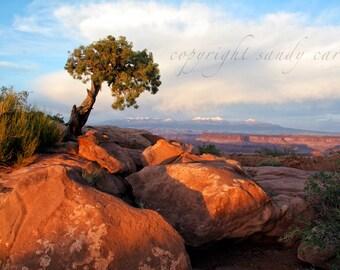 Fine Art Photograph - Canyonlands