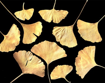 REAL PRESSED GINGKO Leaves Hand Painted Golden - Perfect for Weddings, Decorations, Art & Craft Projects, Holidays, Cards, ScrapBooking