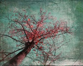 GENTLE GIANT Original Nature Color Art Photograph on Canvas