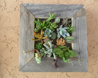 RUSTIC Living Wall Art Kit, As Seen In PEOPLE Magazine, UNCOMMONGOODS, Soil And Moss, 20 Cuttings To Get Started, Housewarming  Gift