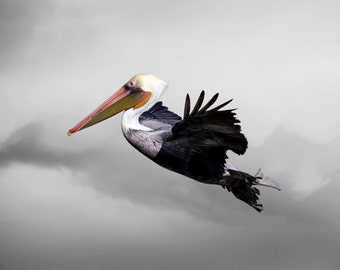 Pelican Art, Limited Edition Photography Fine Art Print, Glide