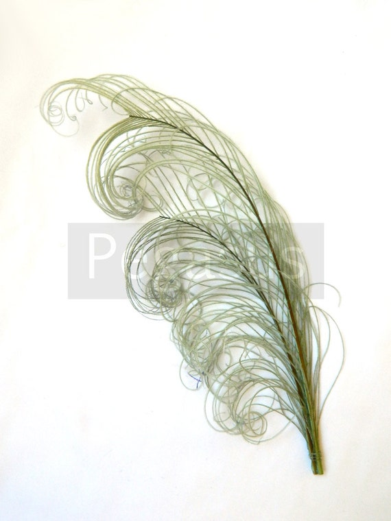 """SAGE Green peacock feather PLUME (1 Piece)(6-8"""")(16 color options) for hats, fascinators, headdresses, headbands and floral arrangements"""