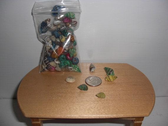 Dollhouse Miniatures Seashells