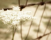 Queen Annes Lace Photograph white country fence rustic western home decor 8x10 cream latte brown - FirstLightPhoto