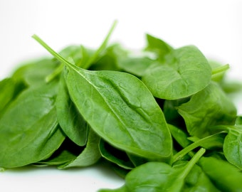 Spinach, Baby Smooth Leaf Spinach Seeds - Highly Nutritious Excellent for Quick Harvests