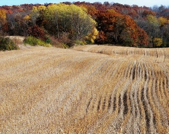 Autumn Field-8x10 Photo