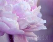 Delicate Peony, 8 x 10, 10 x 13,11 x 14, Fine Art Flower Photo Print, Vintage style, Pink, Dreamy, Floral, Soft Fuchsia Home Decor, Romantic