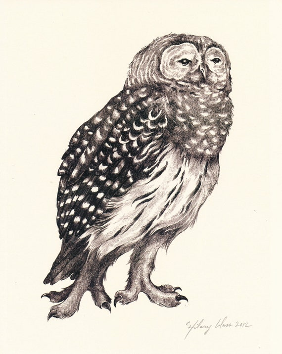"Barred Owl 8"" x 10"""