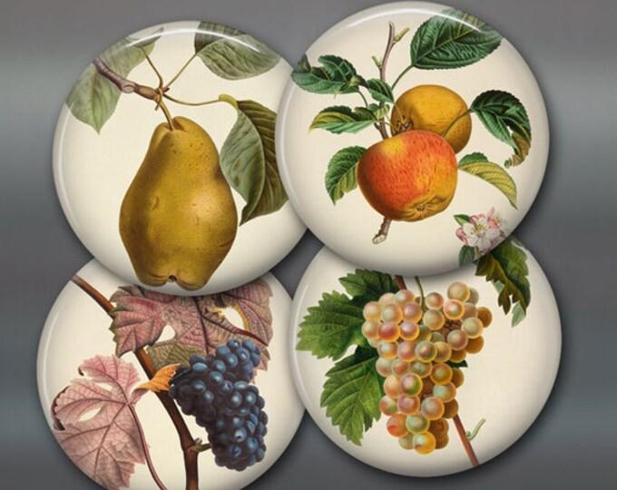 """3.5"""" set of vintage fruit fridge magnets, set of 4 magnets, kitchen decor, large fridge magnet"""
