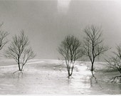 Winter Trees Black & White Fine Art Photograph - CRACKING - Rustic Silver Grey Landscape Mounted Wall Hanging - Original 35mm Film Print