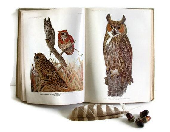 Antique Birds of America Book Color Plates Eggs Owls Eagles