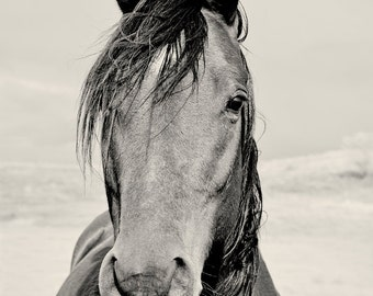 Black and White Horse Portrait Photograph, Vertical Animal photography