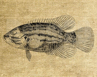INSTANT DOWNLOAD - Vintage Fish Illustration - Download and Print - Image Transfer - Digital Sheet by Room29 - Sheet no. 1009