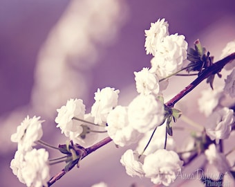 nature flower nursery home decor blue lavender pastel white feminine cottage - Wintery Blossoms - Fine Art Photography Print