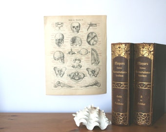 Human Skeleton Details 1896 Lithograph from Vintage Dictionary OOAK One Of A Kind
