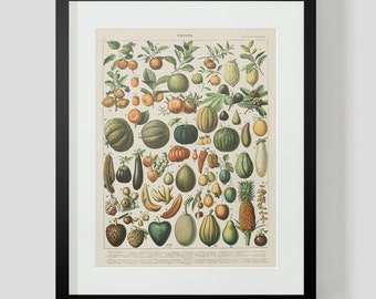 Vintage French Print of Fruits 2