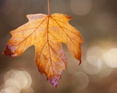 Fall Photography Decor- Leaf Photograph, Nature Photography, Bokeh, Autumn Decor, Earthy Brown, Red, Orange, Fall Photograph