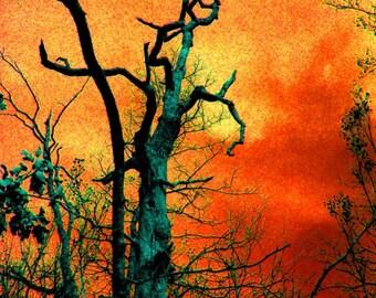 Surrealistic Tree / Surrealistic Landscape / Expressionism / Orange / Red / Blue / Fine Art Photography