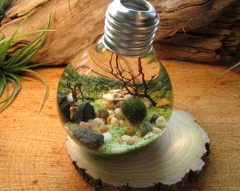 Marimo Terrarium by Midnight Blossom - Reclaimed Light Bulb with Living Moss Ball - Underwater Terrarium