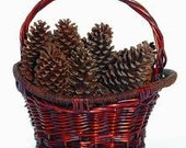 12 ALL NATURAL Large Pine Cones, perfect for crafting