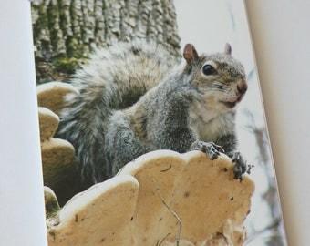 Notebook/Sketchbook/Journal - 4x6 - Posing Squirrel - Original Photograph