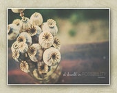 11x14 flower photography, dried poppies, typography, emily dickinson quote, bouquet, fine art print, brown