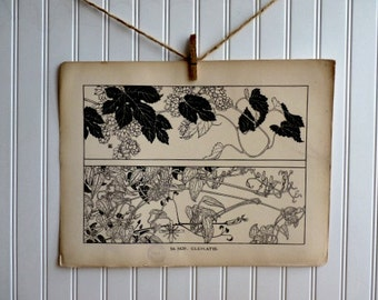 LARGE-Vintage Plant Form Print-Book Plate-Hop-Clematis-1903-Found in Dublin