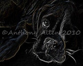 Boxer Dog Abstract Scratch Board Style Art Photograph 8x10 Print