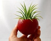 Mini Air Plant Container Pod - Holiday Red Planter