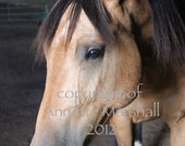 Quarter Horse Buckskin portrait rescue abused art photograph - annetteswhimsies