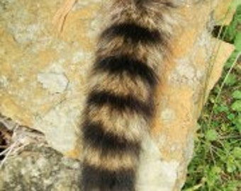 Raccoon Tail with Buckskin Tie